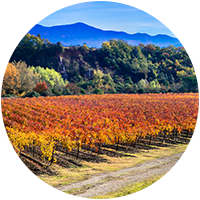 Vineyard in Italy Logo